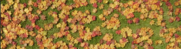 B&Q – Autumn